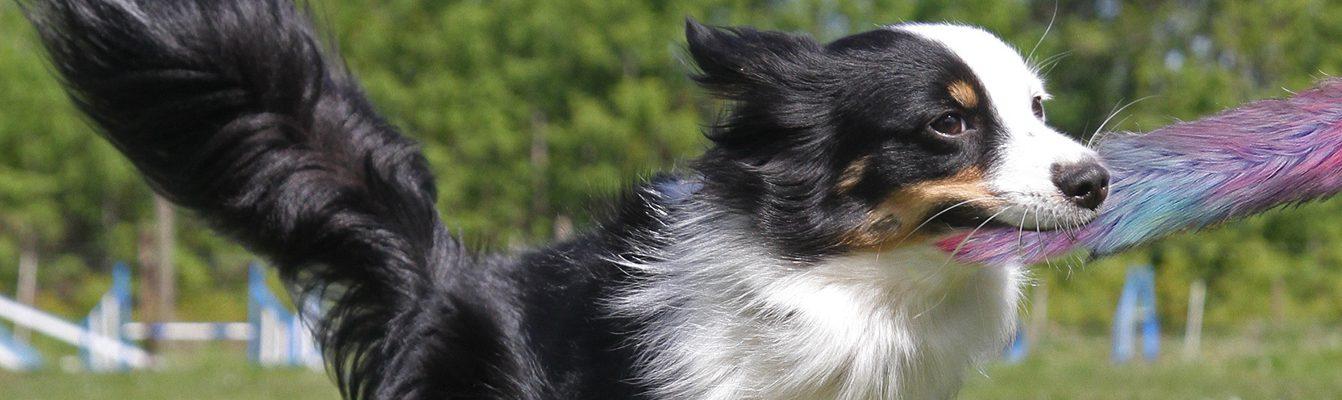 Blauerhund